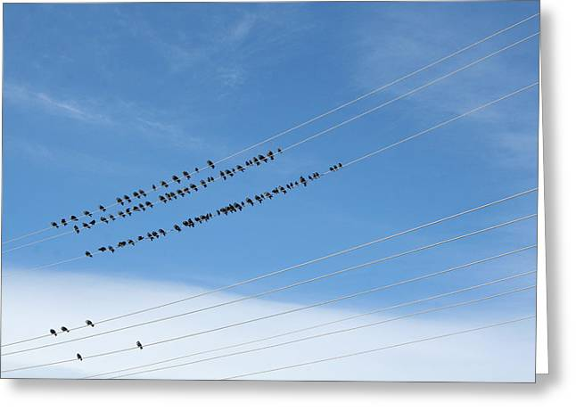 Birds On Wires Greeting Card
