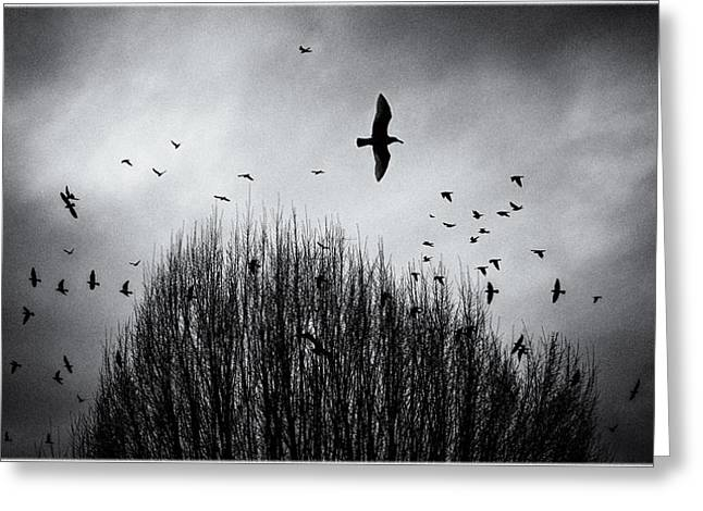 Birds Over Bush Greeting Card by Peter v Quenter