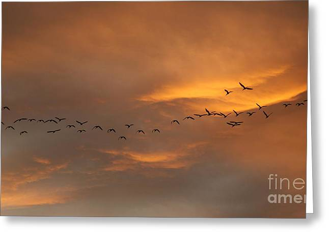Birds Over San Miguel De Allende Greeting Card by John  Kolenberg