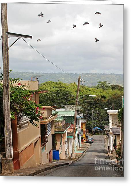 Birds Over Yabucoa Greeting Card