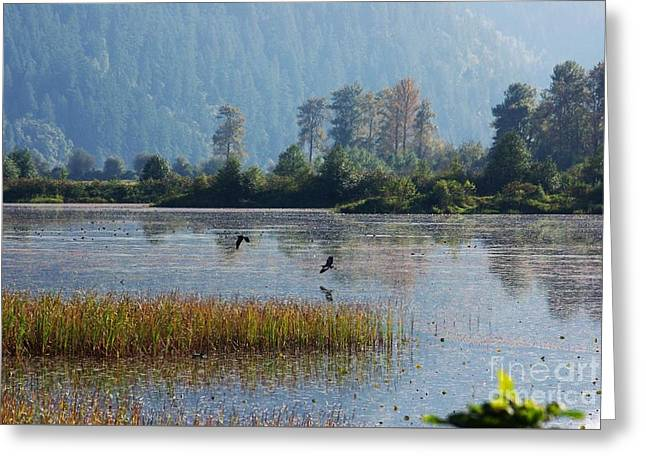 Birds Paradise Greeting Card by Victor K