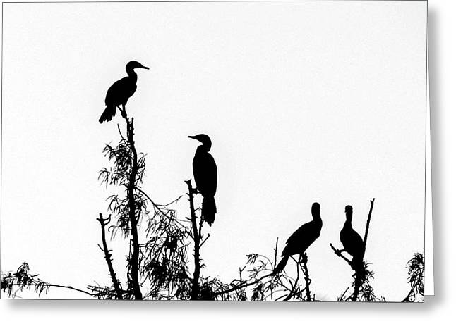 Birds Perched On Branches Greeting Card