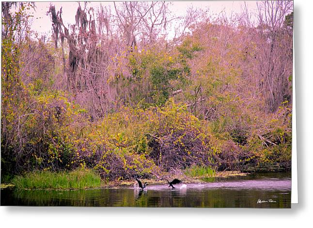 Birds Playing In The Pond 1 Greeting Card by Madeline Ellis