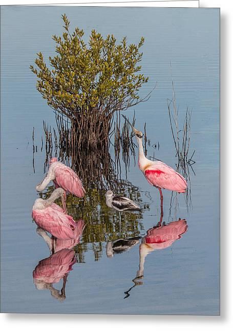 Birds, Reflections, And Mangrove Bush Greeting Card