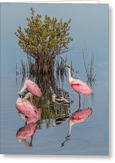 Birds, Reflections, And Mangrove Bush Greeting Card by Dorothy Cunningham