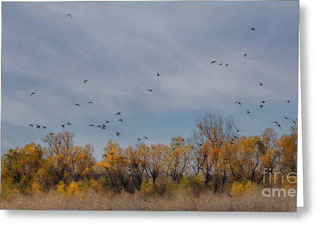 Birds Upon The Sky Greeting Card