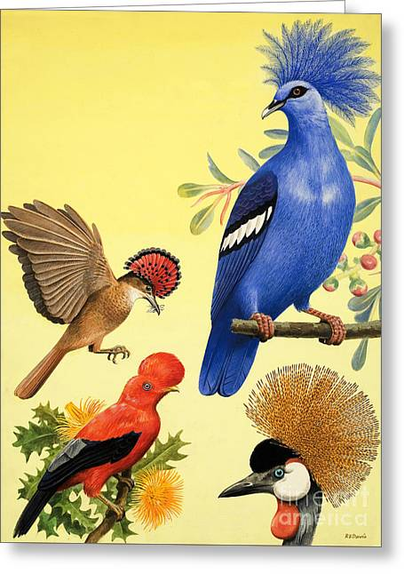 Birds With Crowns Greeting Card by RB Davis