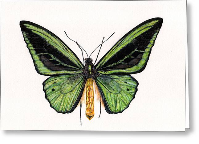 Birdwing Butterfly Greeting Card by Rachel Pedder-Smith