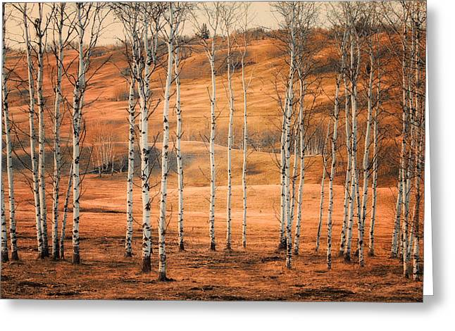 Birtch Trees Greeting Card by Naman Imagery