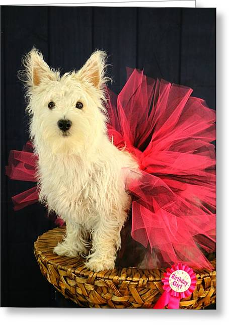 Cute Westie Greeting Cards Page 6 Of 6 Fine Art America