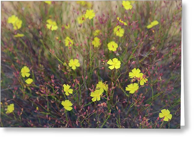 Greeting Card featuring the photograph Bisbee Peak Rushrose by Alexander Kunz