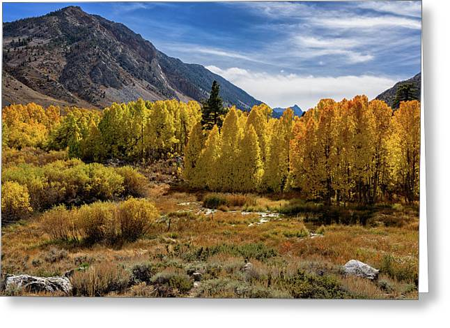 Greeting Card featuring the photograph Bishop Creek Aspen by John Hight