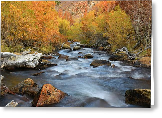 Greeting Card featuring the photograph Bishop Creek Fall Season by Dung Ma