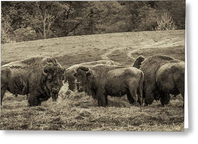 Greeting Card featuring the photograph Bison 1 - Pano by Joye Ardyn Durham