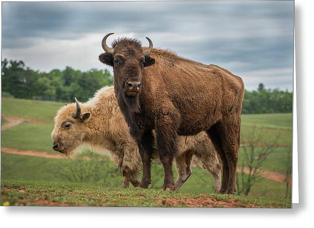 Greeting Card featuring the photograph Bison 10 by Joye Ardyn Durham