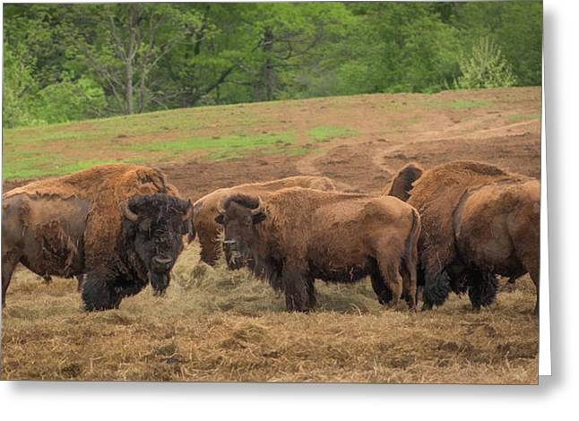 Greeting Card featuring the photograph Bison 2 by Joye Ardyn Durham