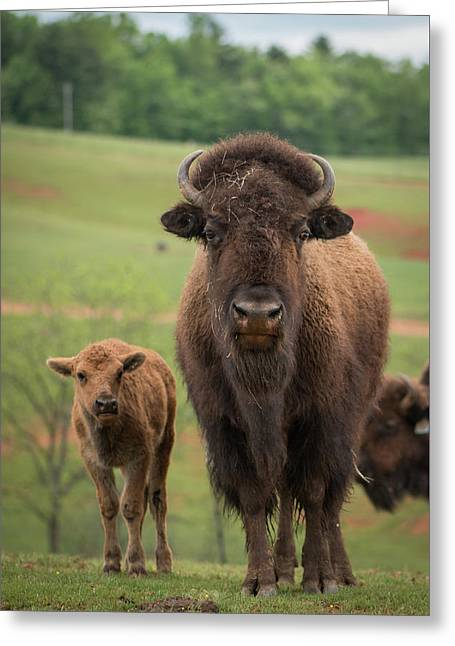 Greeting Card featuring the photograph Bison 4 by Joye Ardyn Durham