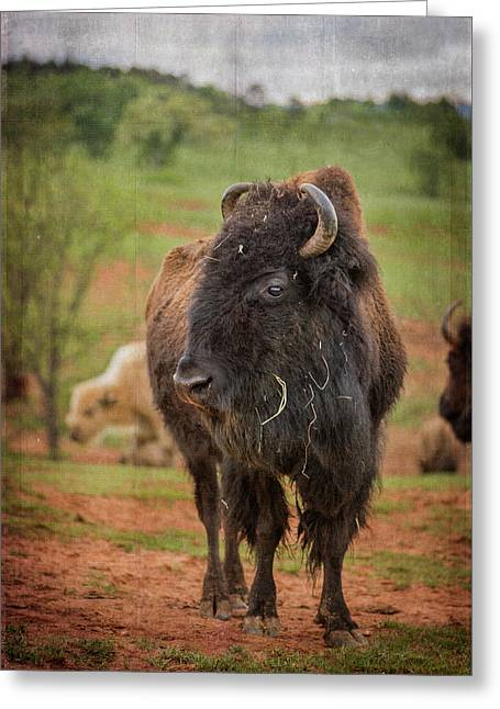 Greeting Card featuring the photograph Bison 5 by Joye Ardyn Durham