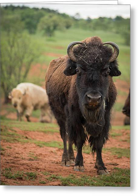 Greeting Card featuring the photograph Bison 6 by Joye Ardyn Durham