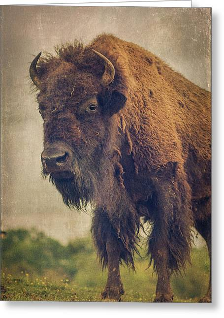 Greeting Card featuring the photograph Bison 8 by Joye Ardyn Durham