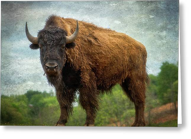 Greeting Card featuring the photograph Bison 9 by Joye Ardyn Durham