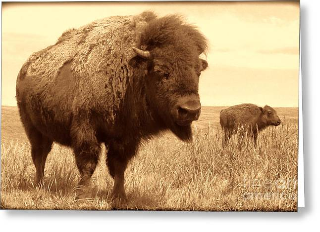 Bison And Calf Greeting Card