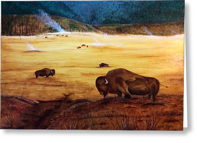 Bison And Geysers Greeting Card by Kent Stucky