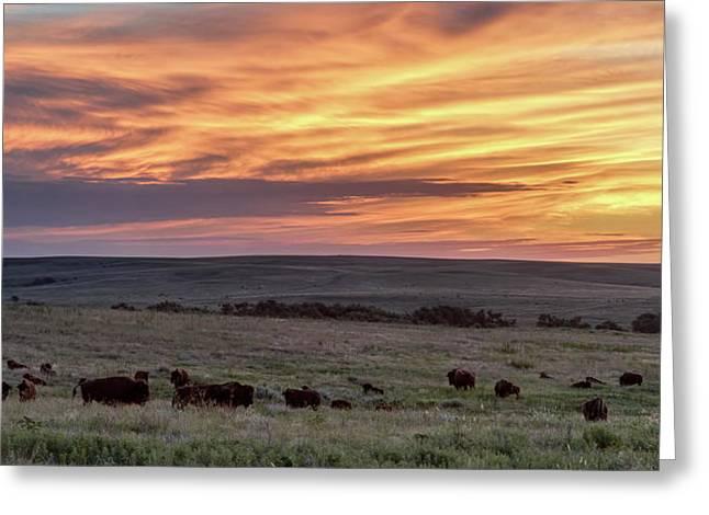 Bison At Sunrise Greeting Card