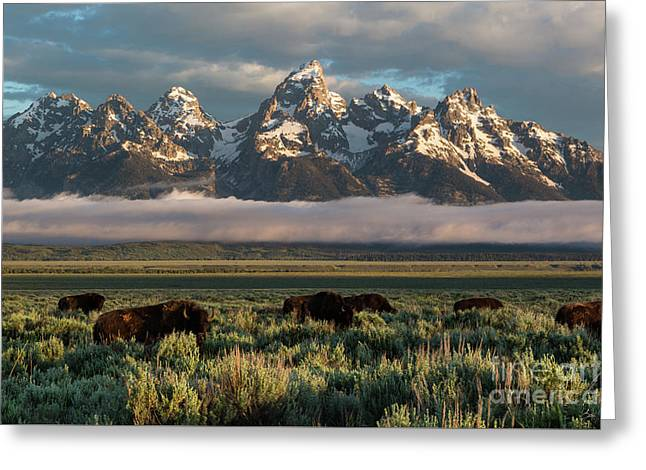 Bison Below Teton Mountains Greeting Card