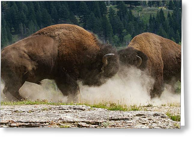 Bison Duel Greeting Card