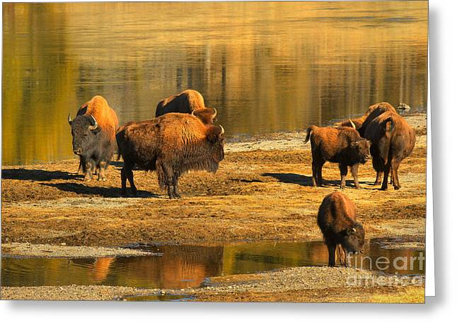 Greeting Card featuring the photograph Bison Family Crossing by Adam Jewell