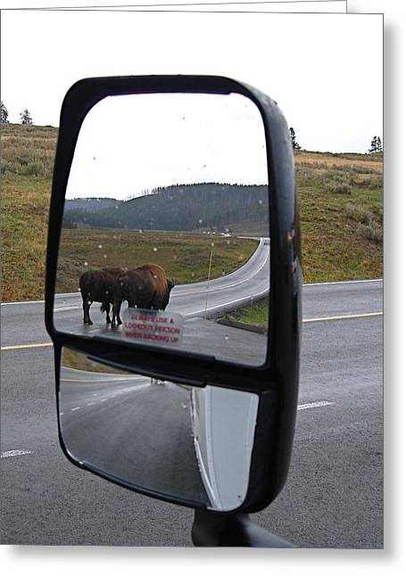 Bison In My Rear View Greeting Card