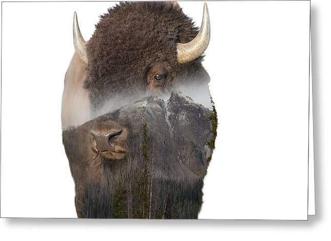 Bison Mountain  Greeting Card