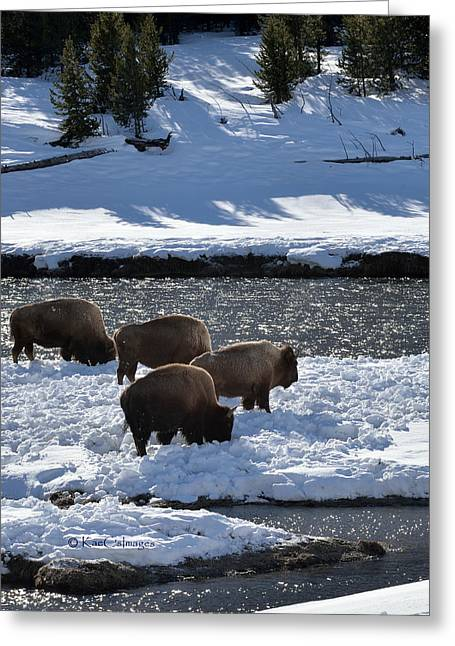 Greeting Card featuring the photograph Bison On River Strand by Kae Cheatham