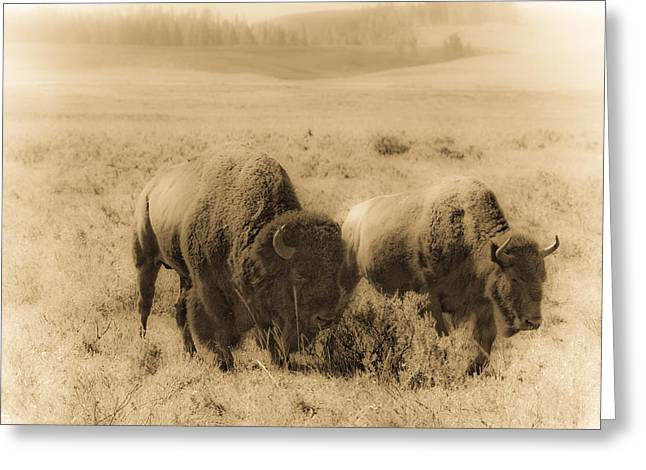 Bison Pair Greeting Card by Patrick  Flynn