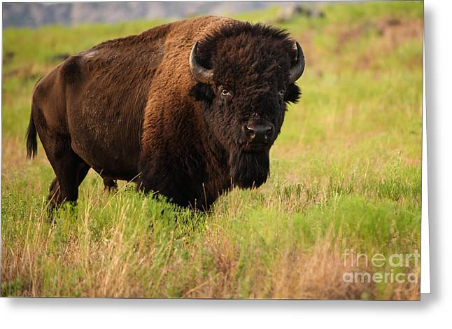 Bison Prime Greeting Card