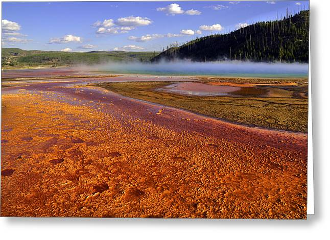 Bison Tracks In The Grand Prismatic Spring Greeting Card by Patrick  Flynn