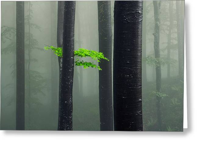 Bit Of Green Greeting Card by Evgeni Dinev