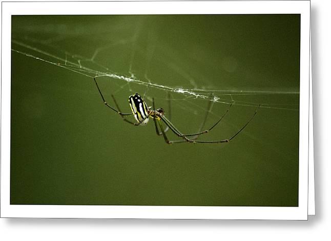 Bitsy Spider Greeting Card by W Scott Morrison