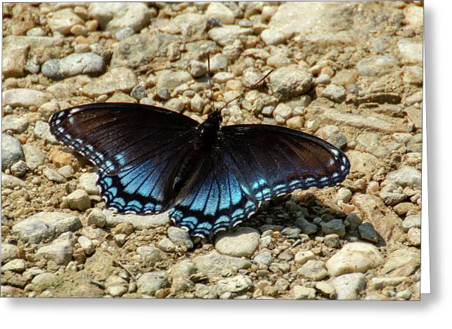 Black And Blue Monarch Butterfly Greeting Card