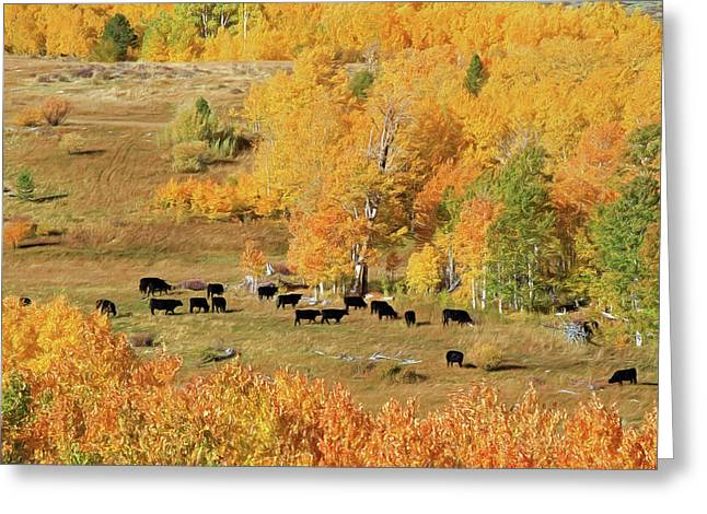 Greeting Card featuring the photograph Black And Gold by Donna Kennedy