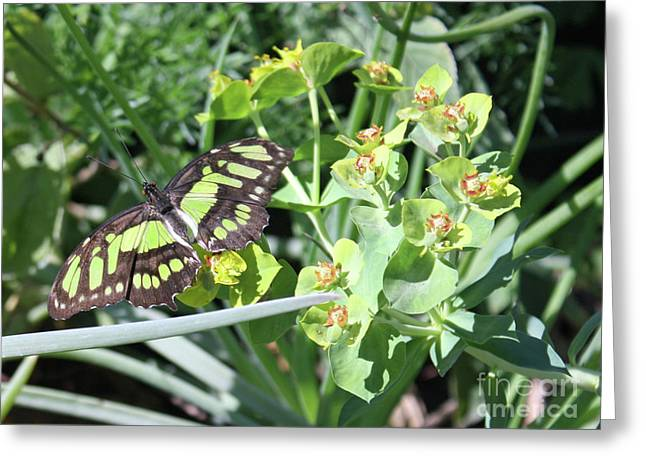 Black And Green Butterfly Greeting Card