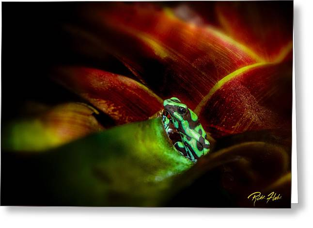Greeting Card featuring the photograph Black And Green Dart Frog In The Red Bromeliad by Rikk Flohr