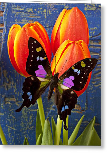 Black And Pink Butterfly Greeting Card by Garry Gay