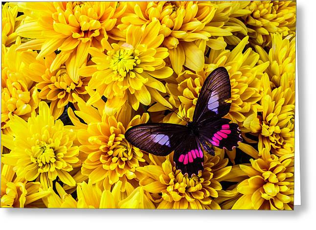 Black And Red Butterfly Greeting Card by Garry Gay