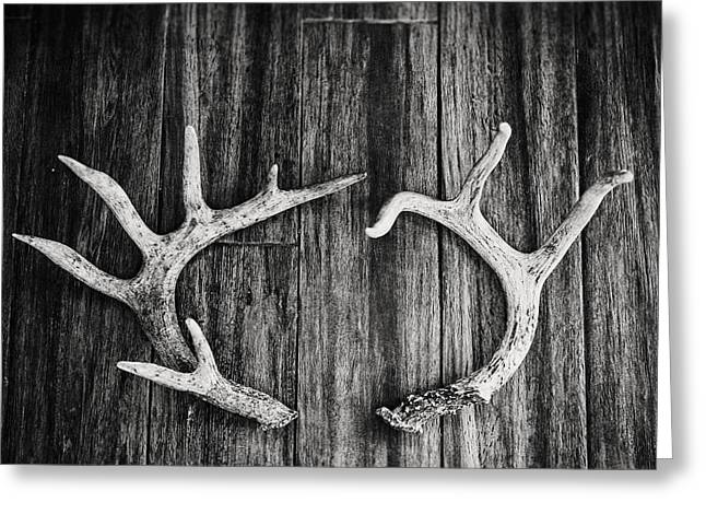 Black And White Antler Photography Greeting Card