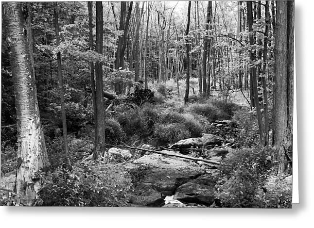 Black And White Babbling Brook Greeting Card