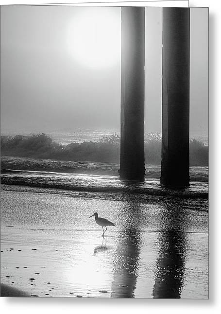 Greeting Card featuring the photograph Black And White Bird Beach by John McGraw