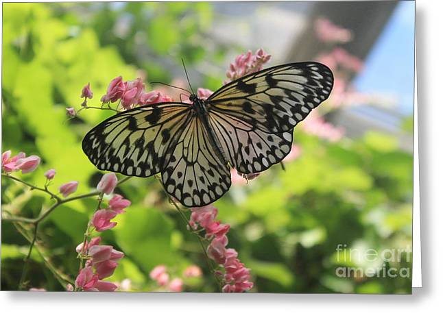 Black And White Butterfly  Greeting Card by Teresa Thomas