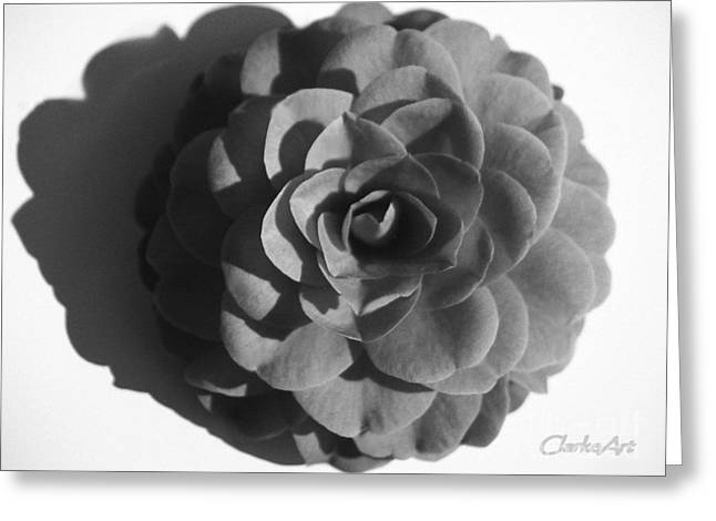 Camellia In Black And White Greeting Card